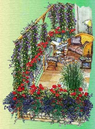 Растения для балконов и лоджий.